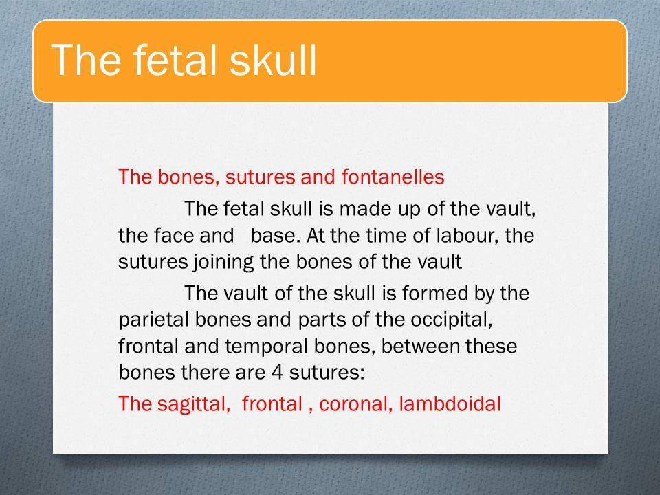 The fetal skull