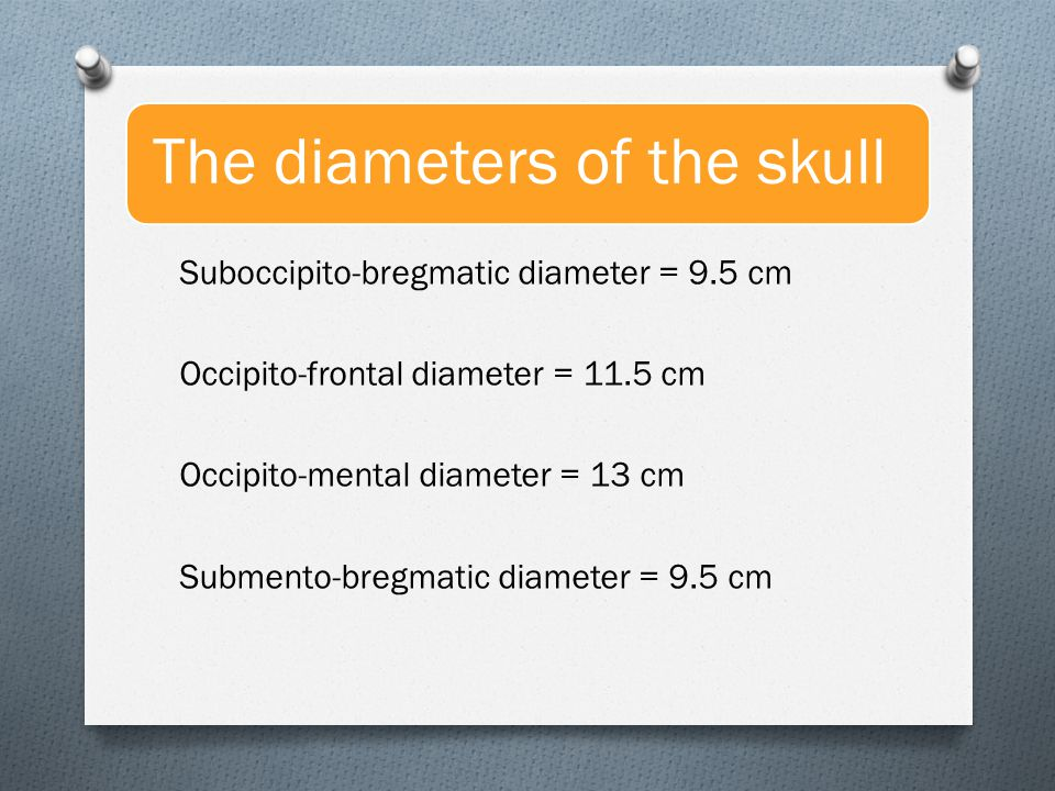 The diameters of the skull