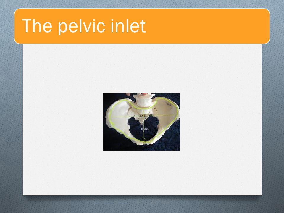 The pelvic inlet