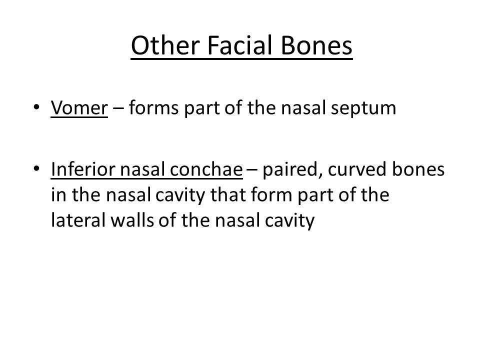 Other Facial Bones Vomer – forms part of the nasal septum