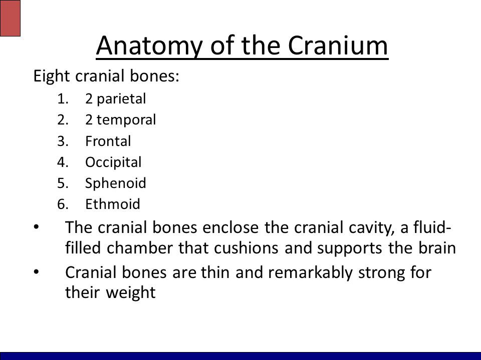 Anatomy of the Cranium Eight cranial bones: