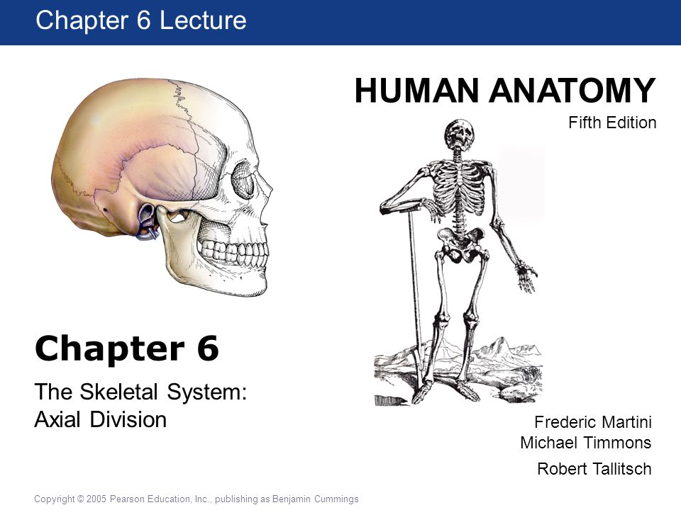 The Skeletal System: Axial Division