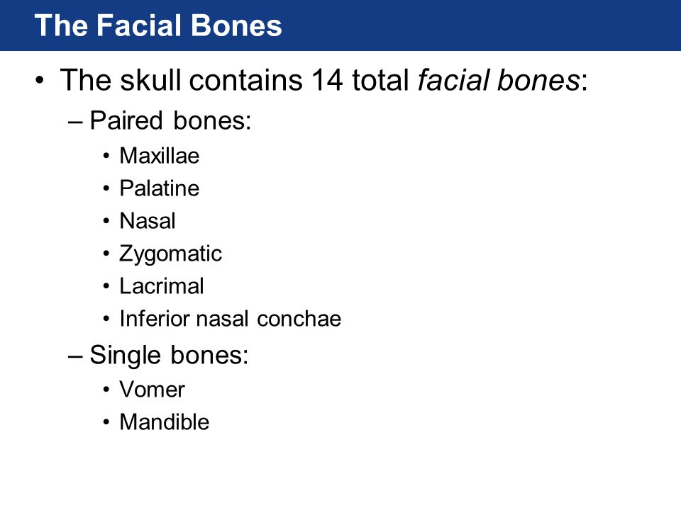 The skull contains 14 total facial bones: