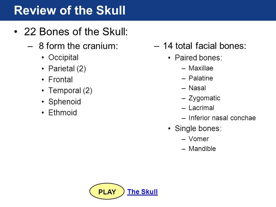 Review of the Skull 22 Bones of the Skull: 8 form the cranium: