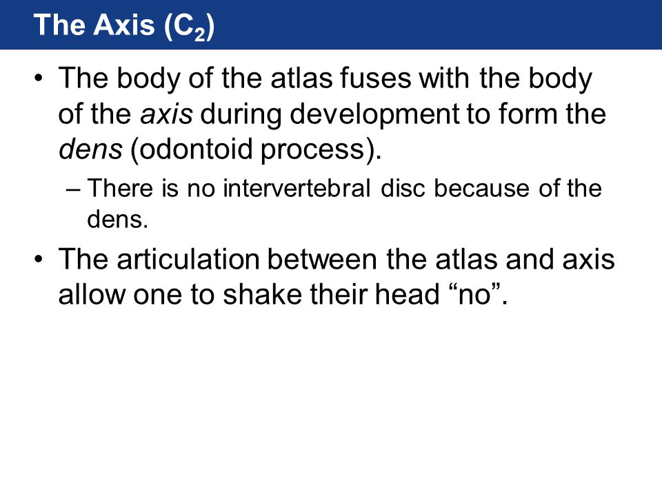 The Axis (C2) The body of the atlas fuses with the body of the axis during development to form the dens (odontoid process).