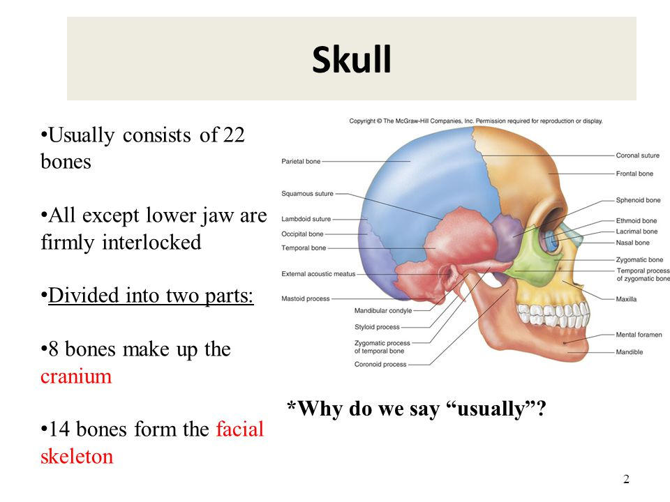 Skull Usually consists of 22 bones