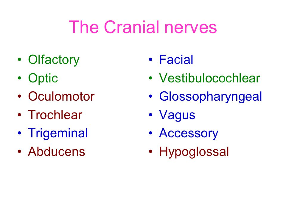 The Cranial nerves Olfactory Optic Oculomotor Trochlear Trigeminal