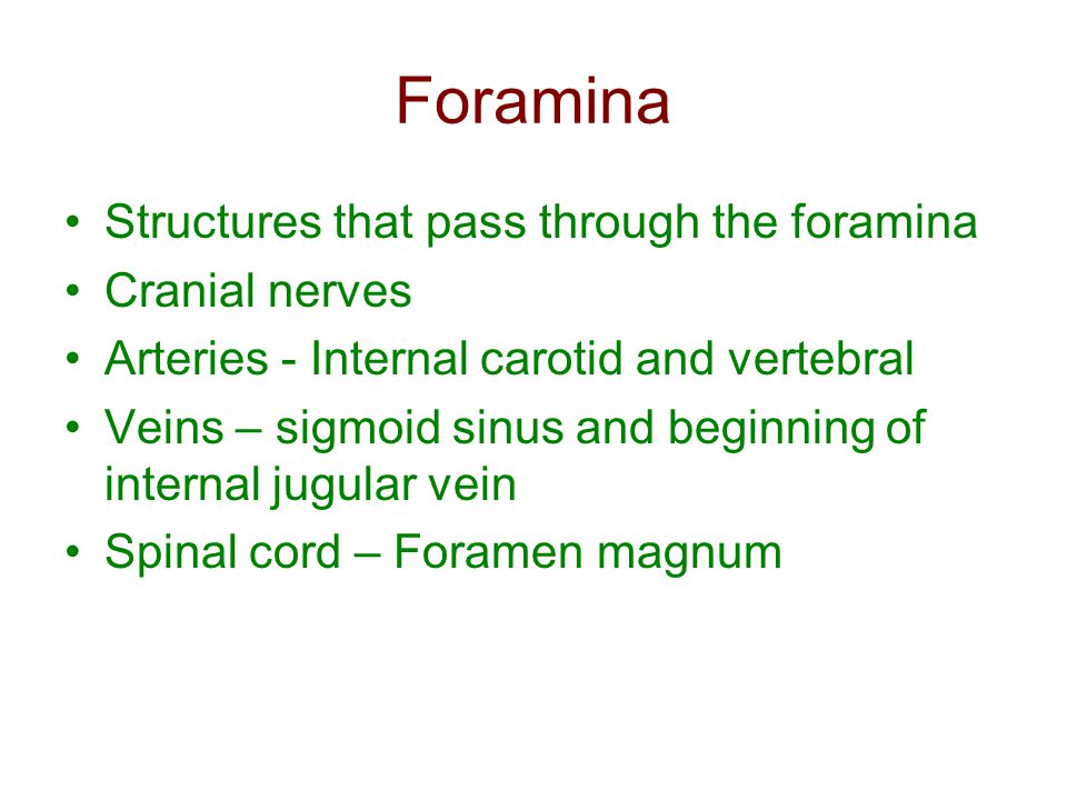 Foramina Structures that pass through the foramina Cranial nerves