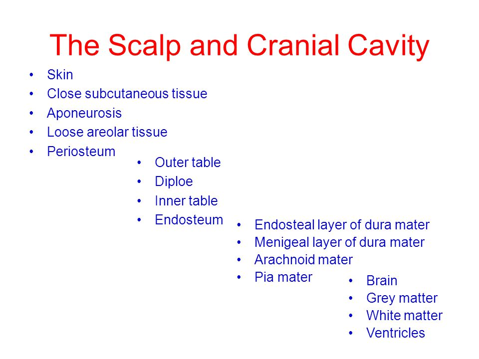 The Scalp and Cranial Cavity