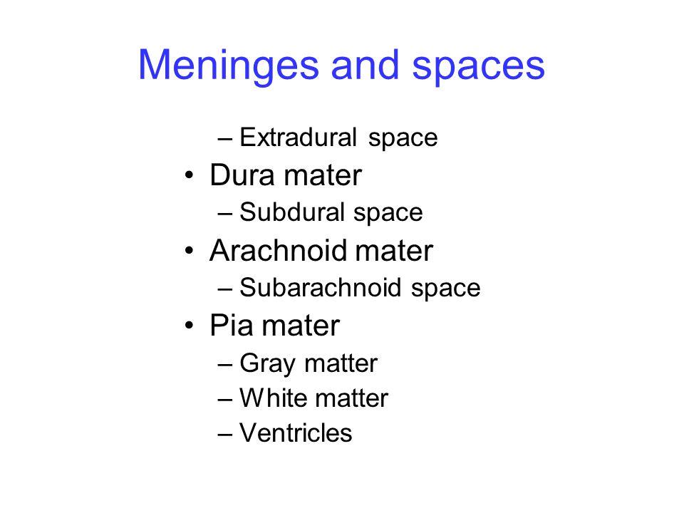 Meninges and spaces Dura mater Arachnoid mater Pia mater