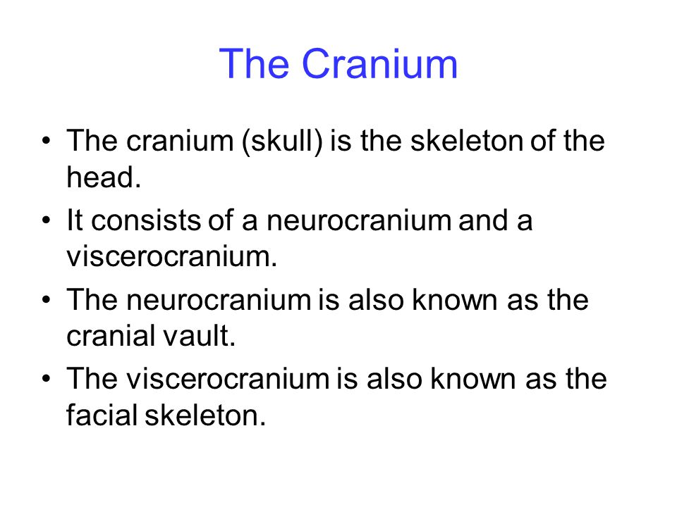 The Cranium The cranium (skull) is the skeleton of the head.