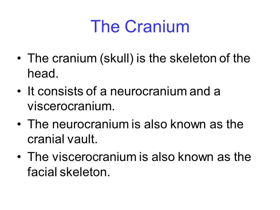 The Cranium The cranium (skull) is the skeleton of the head.