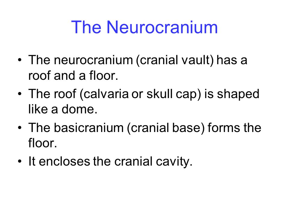 The Neurocranium The neurocranium (cranial vault) has a roof and a floor. The roof (calvaria or skull cap) is shaped like a dome.