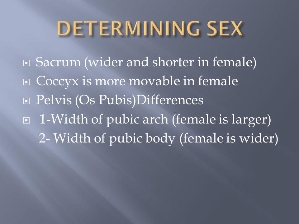 DETERMINING SEX Sacrum (wider and shorter in female)