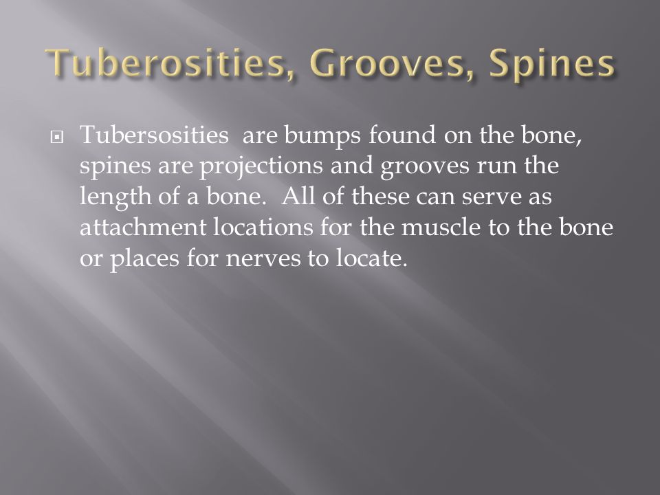Tuberosities, Grooves, Spines