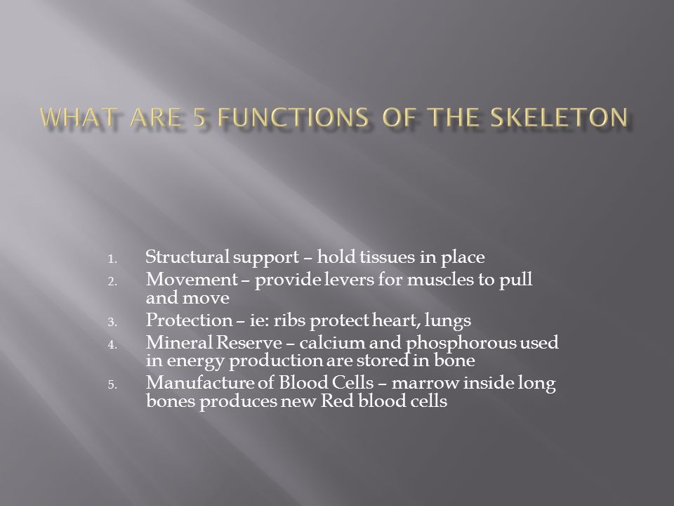 What are 5 functions of the skeleton