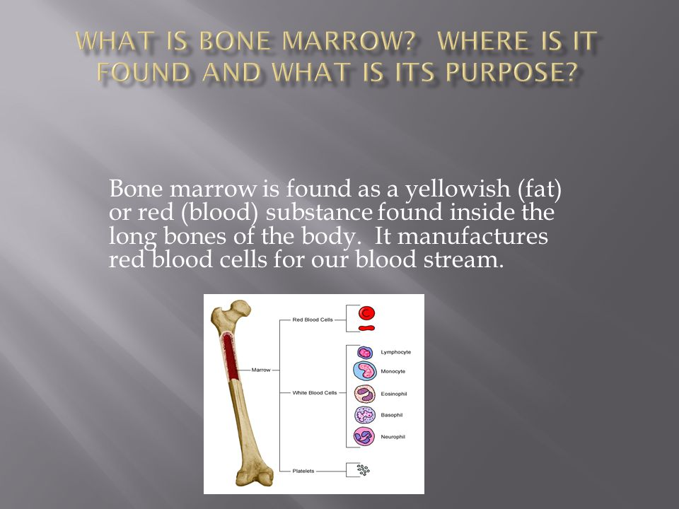 What is bone marrow Where is it found and what is its purpose