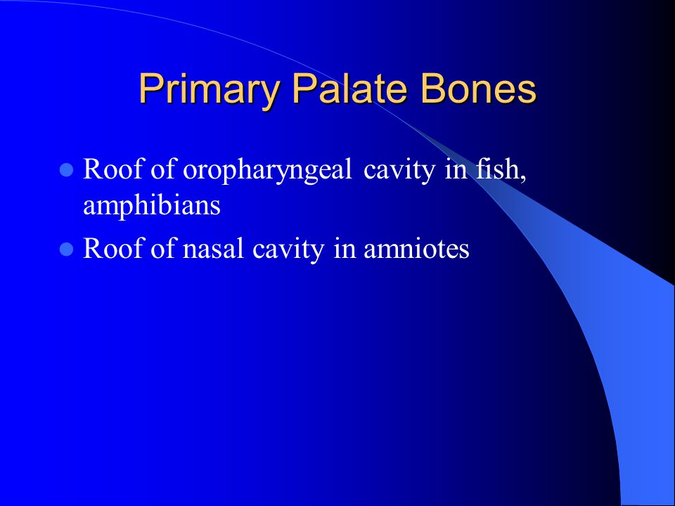 Primary Palate Bones Roof of oropharyngeal cavity in fish, amphibians