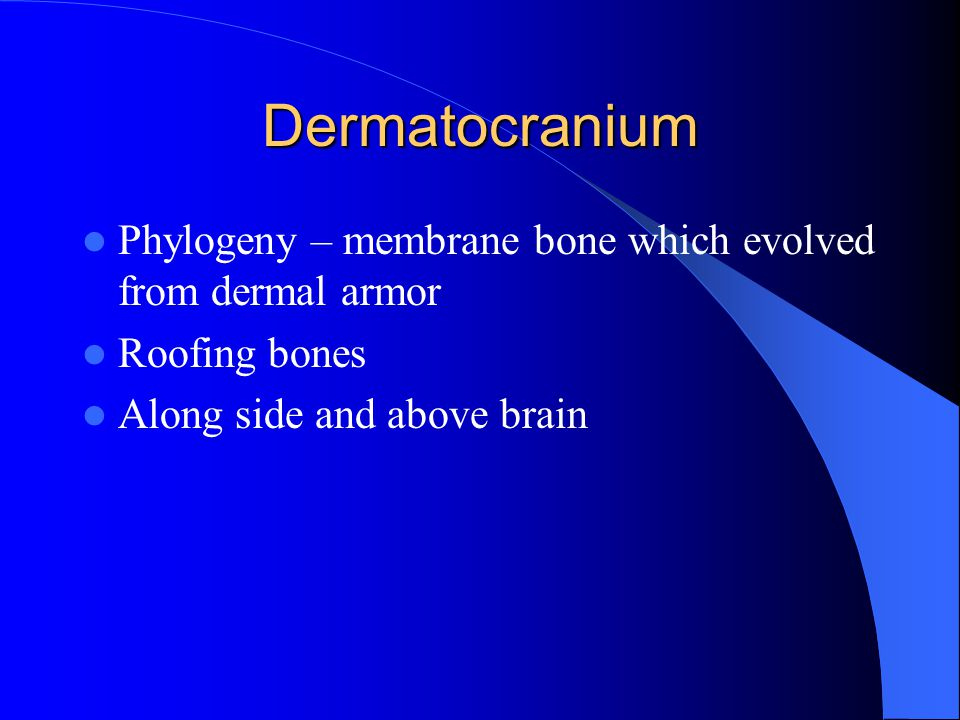 Dermatocranium Phylogeny – membrane bone which evolved from dermal armor.