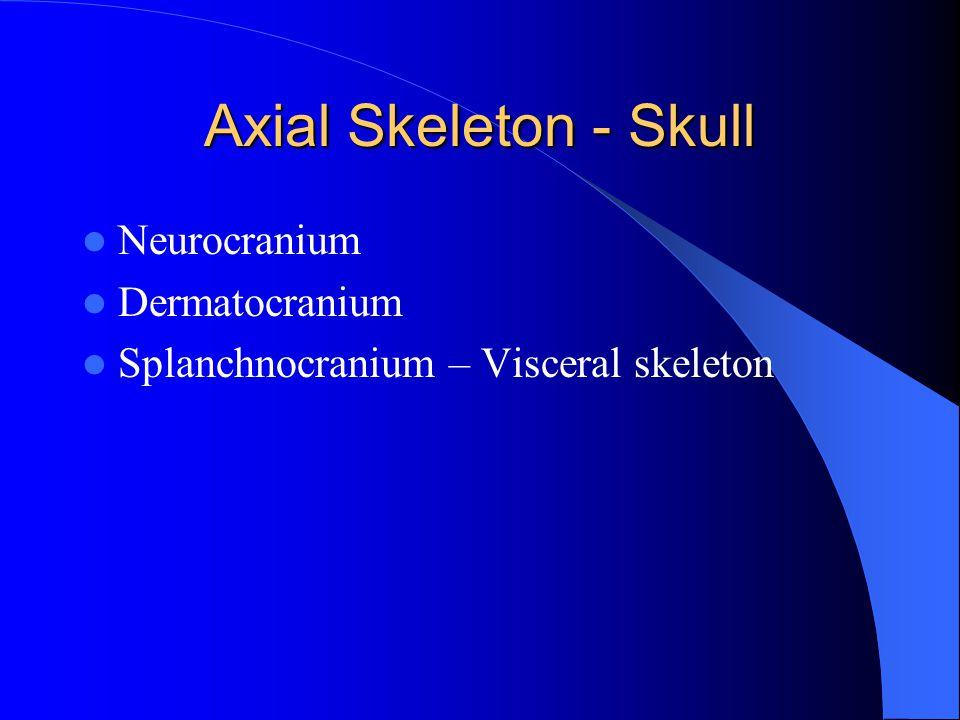 Axial Skeleton - Skull Neurocranium Dermatocranium