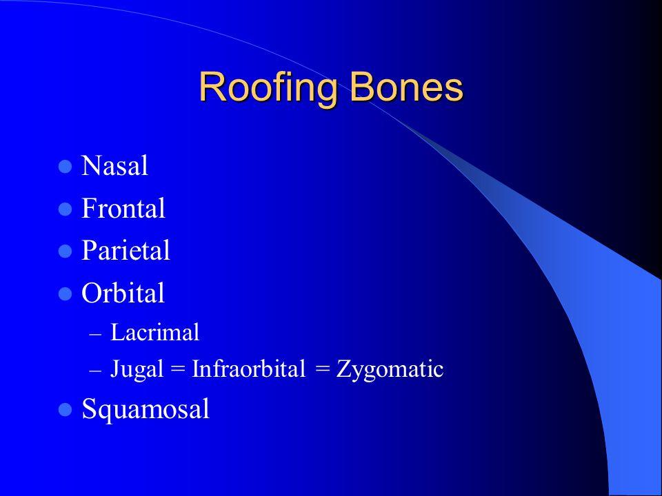 Roofing Bones Nasal Frontal Parietal Orbital Squamosal Lacrimal