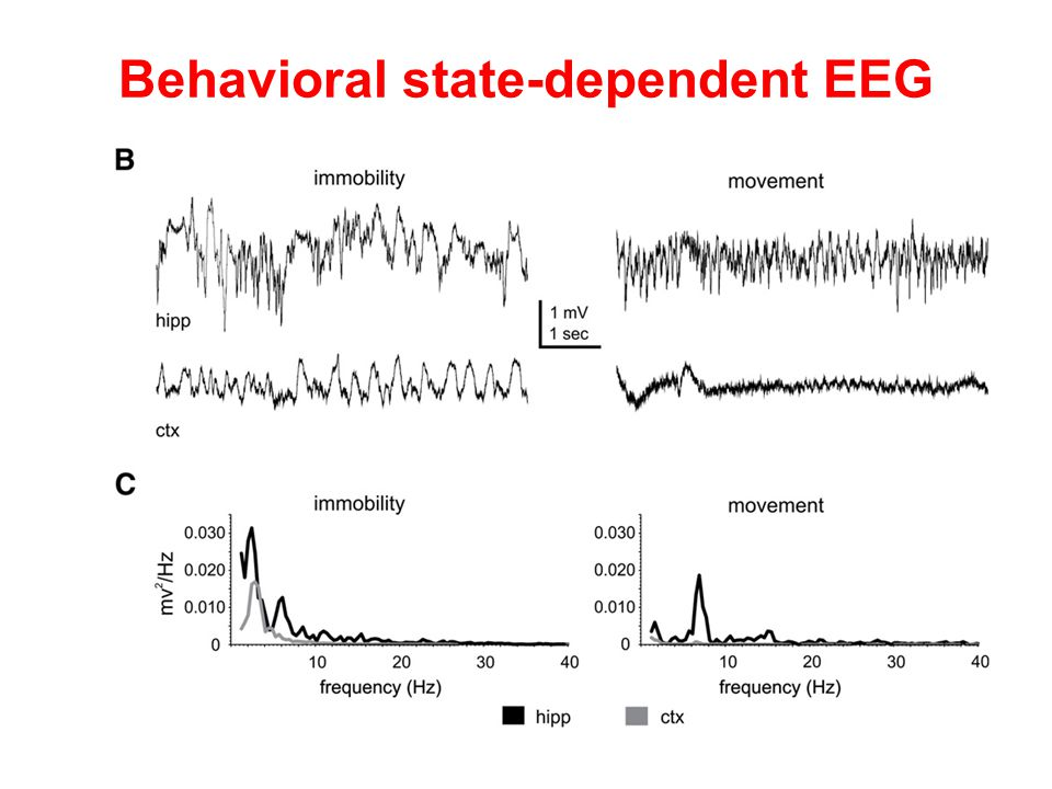Behavioral state-dependent EEG