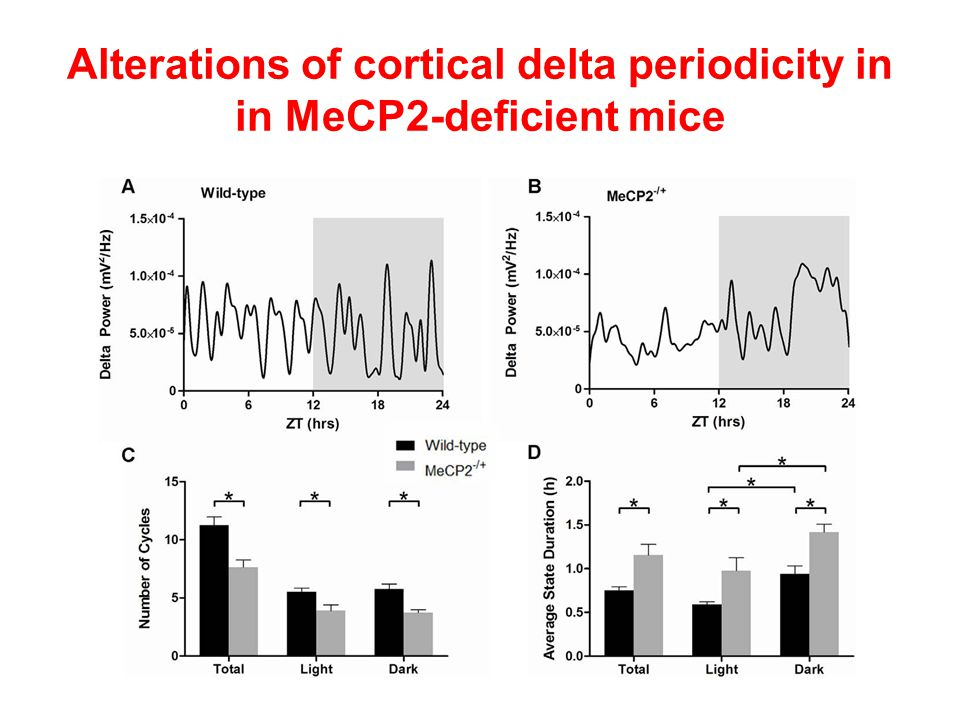 Alterations of cortical delta periodicity in in MeCP2-deficient mice