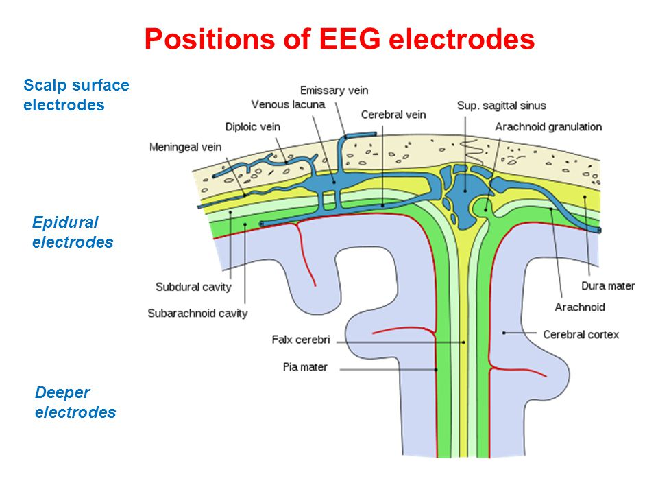 Positions of EEG electrodes