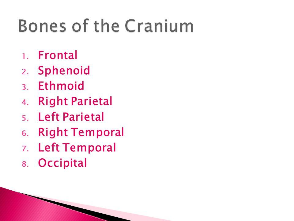Bones of the Cranium Frontal Sphenoid Ethmoid Right Parietal