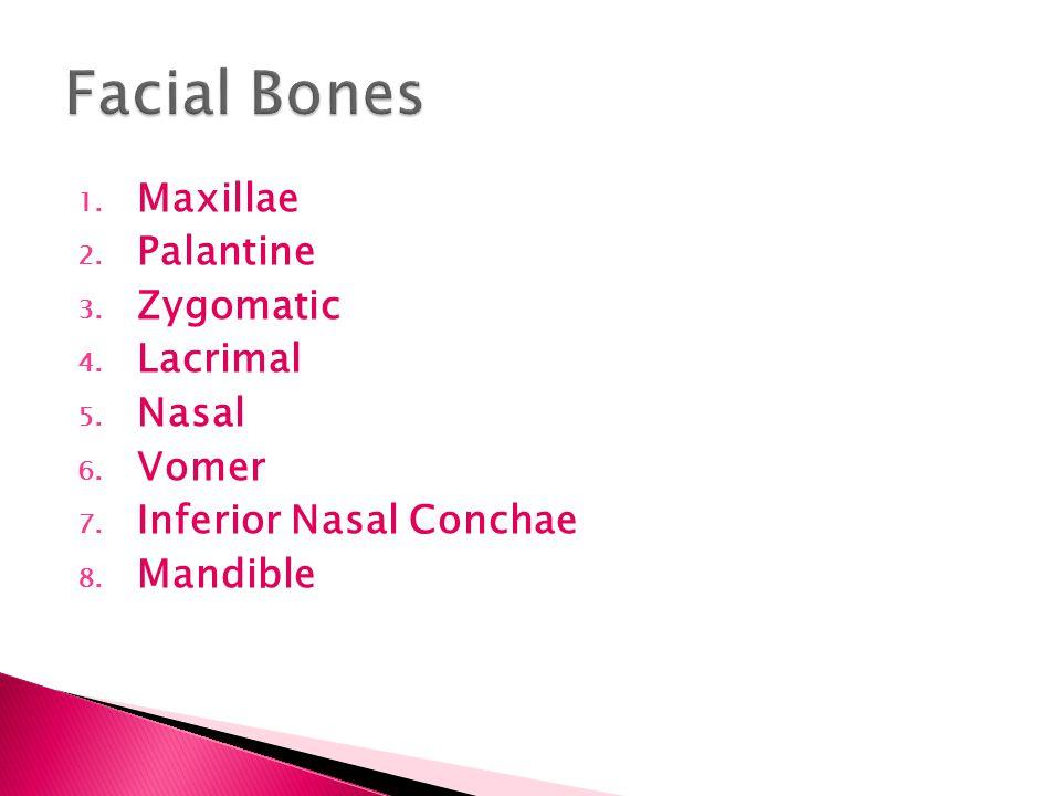 Facial Bones Maxillae Palantine Zygomatic Lacrimal Nasal Vomer