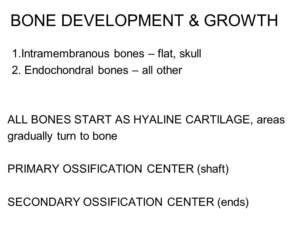 Bone Development & Growth