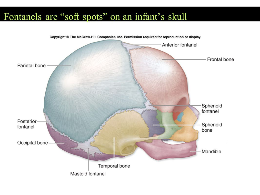 TOPOGRAPHY OF THE SKULL