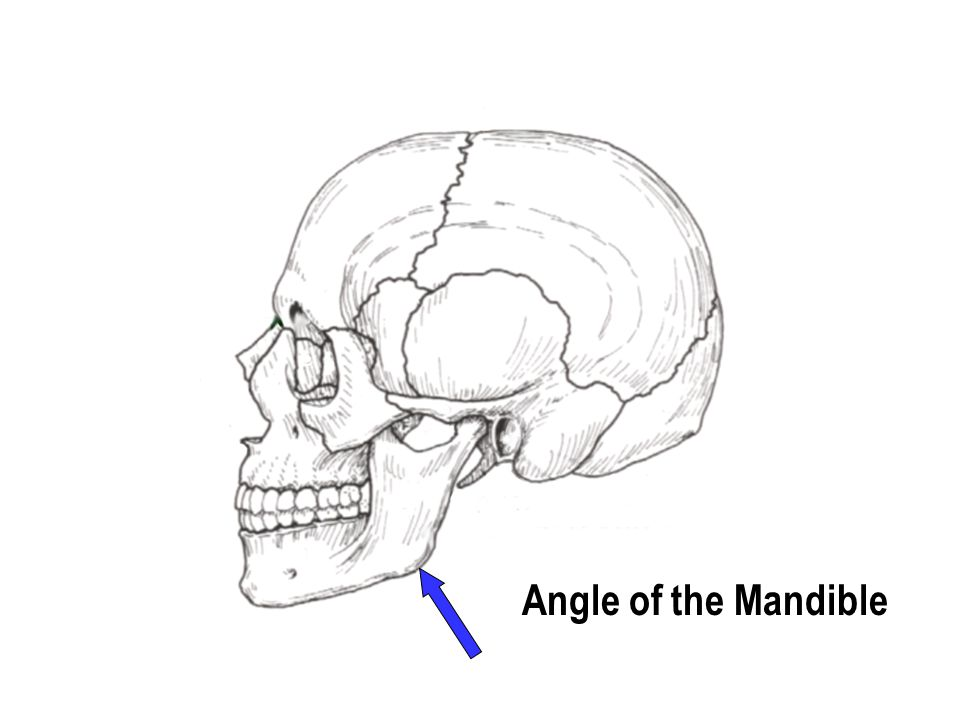 Angle of the Mandible