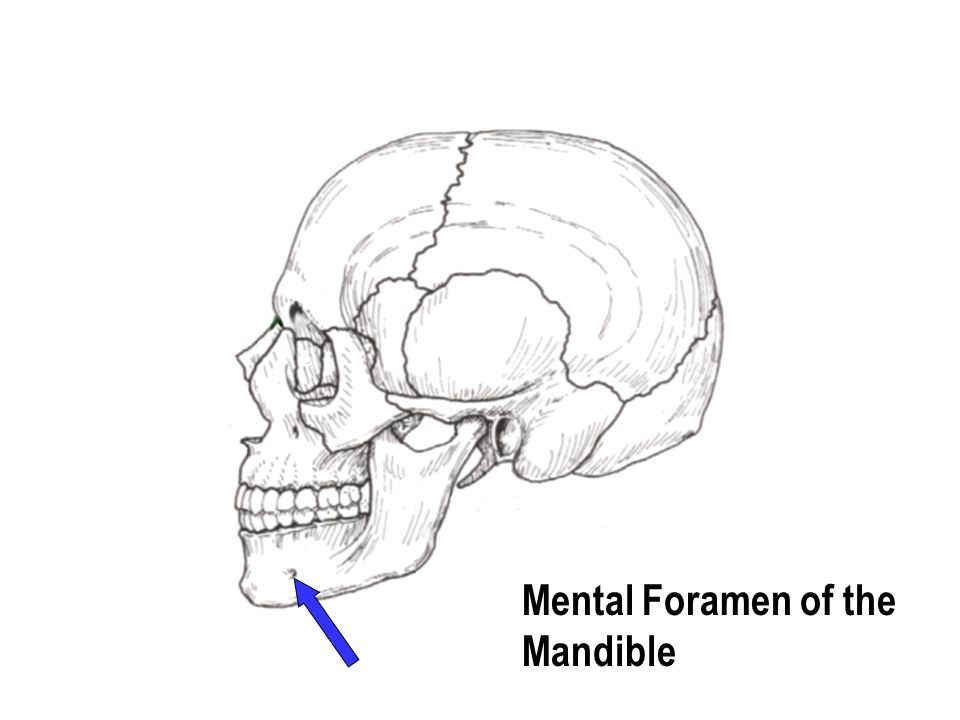 Mental Foramen of the Mandible
