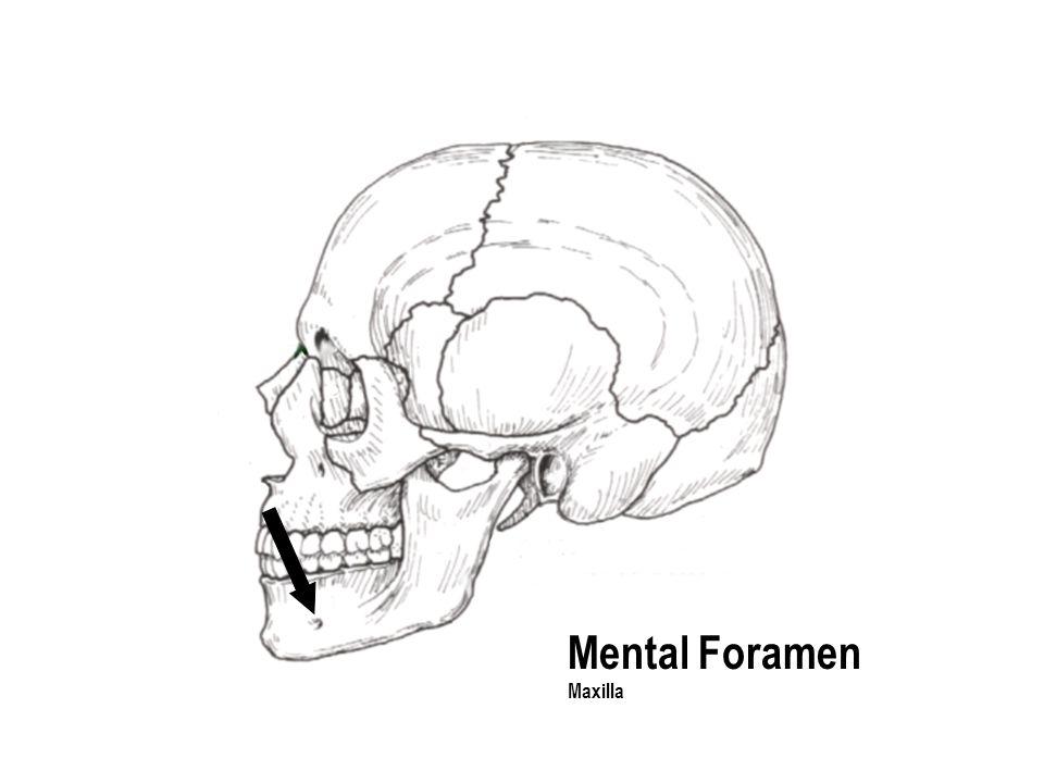Mental Foramen Maxilla