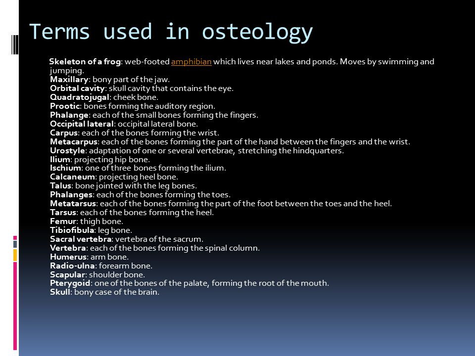 Terms used in osteology