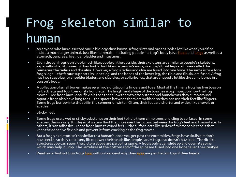 Frog skeleton similar to human