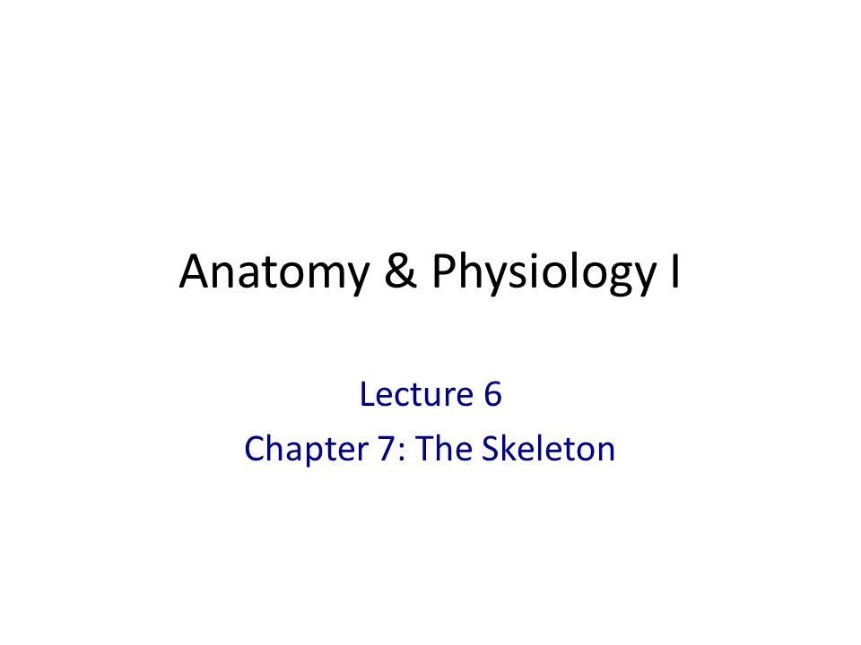 Lecture 6 Chapter 7: The Skeleton