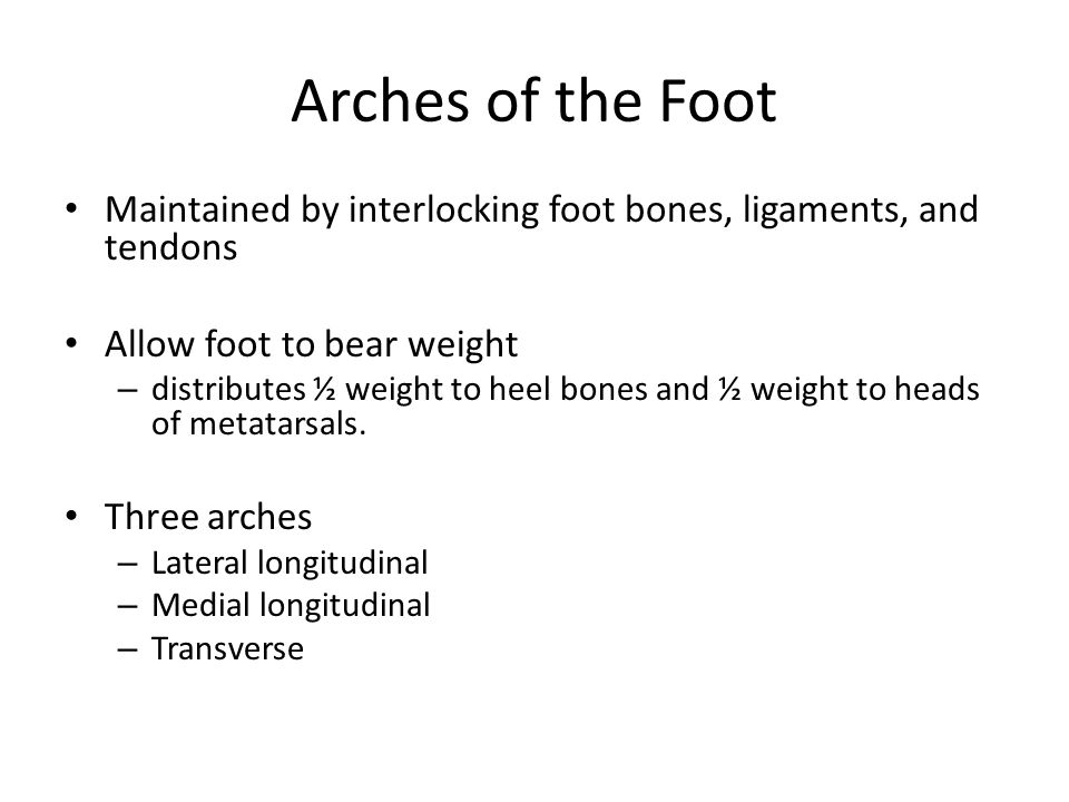 Arches of the Foot Maintained by interlocking foot bones, ligaments, and tendons. Allow foot to bear weight.