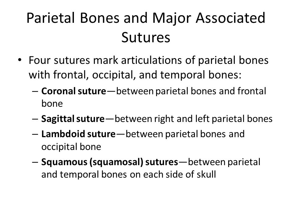 Parietal Bones and Major Associated Sutures