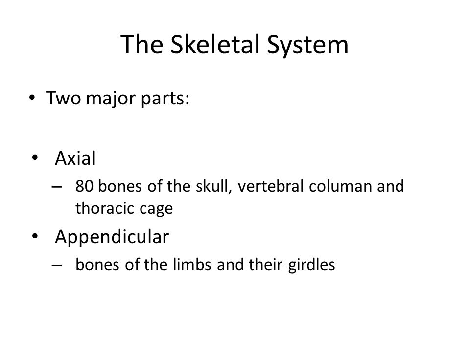The Skeletal System Two major parts: Axial Appendicular