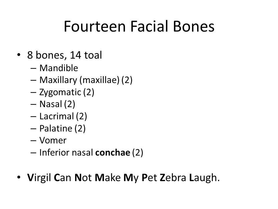 Fourteen Facial Bones 8 bones, 14 toal