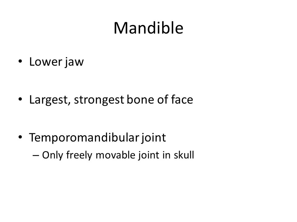 Mandible Lower jaw Largest, strongest bone of face