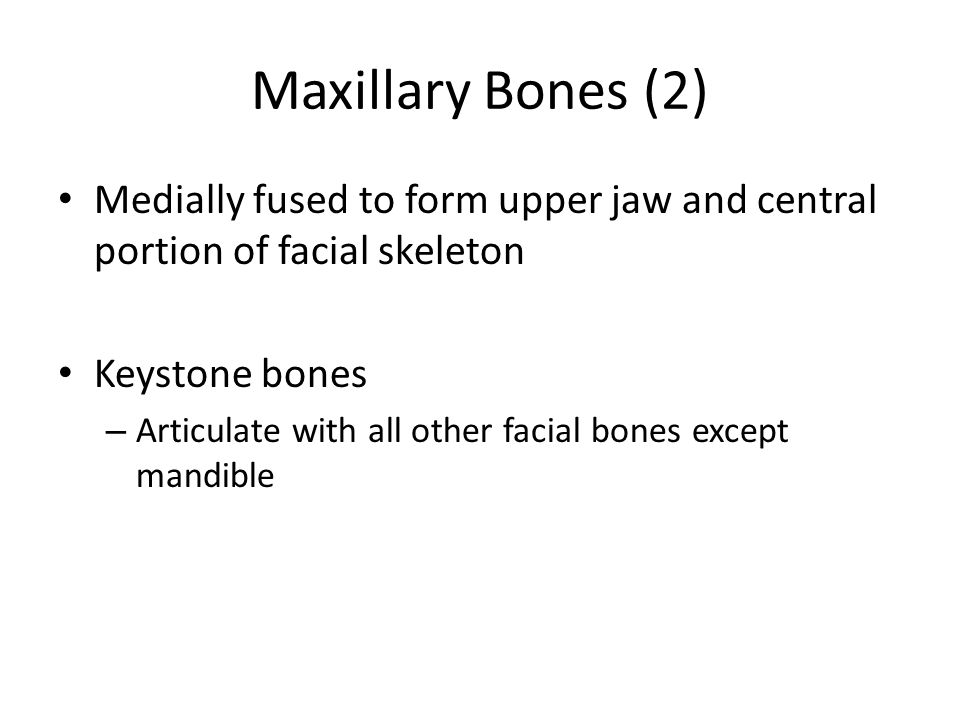 Maxillary Bones (2) Medially fused to form upper jaw and central portion of facial skeleton. Keystone bones.
