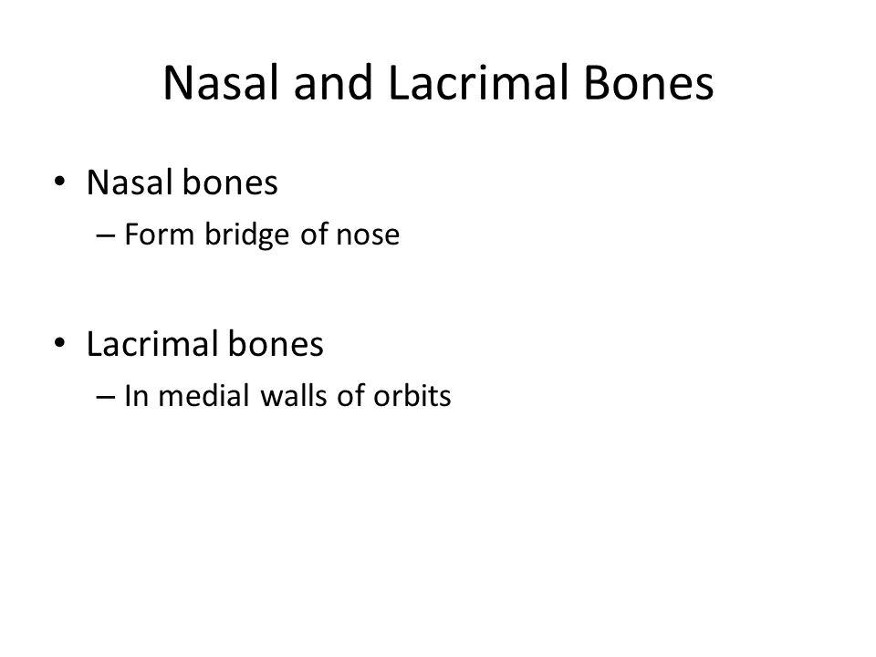 Nasal and Lacrimal Bones