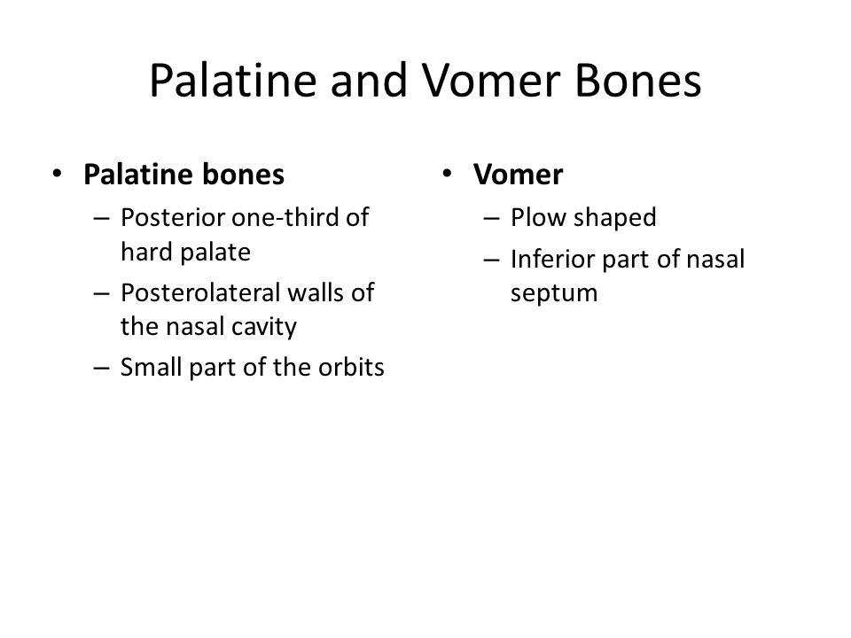 Palatine and Vomer Bones
