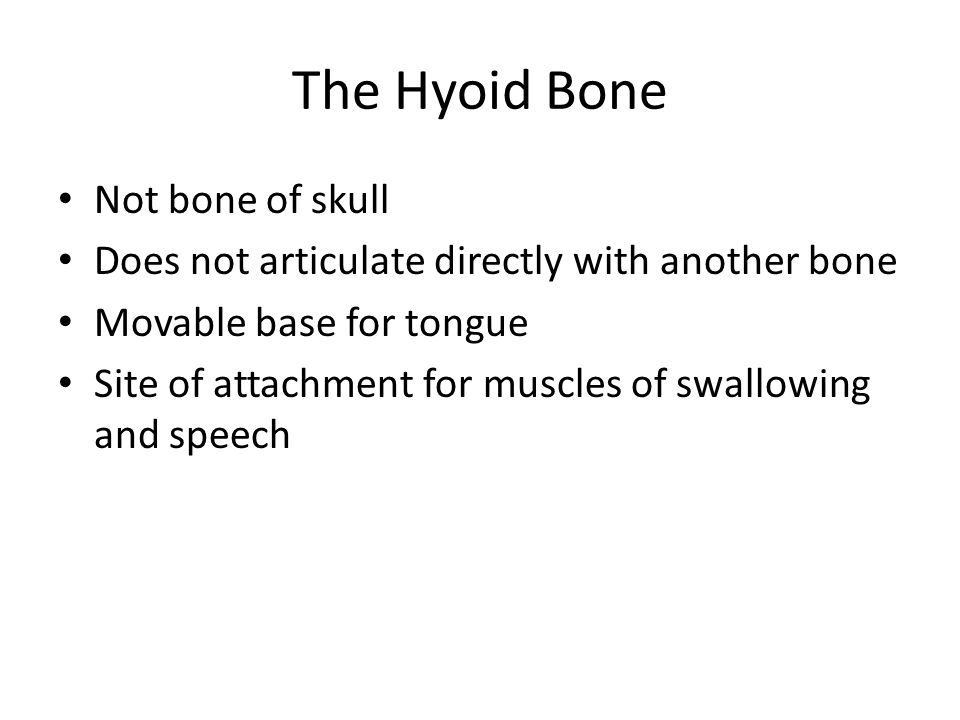 The Hyoid Bone Not bone of skull