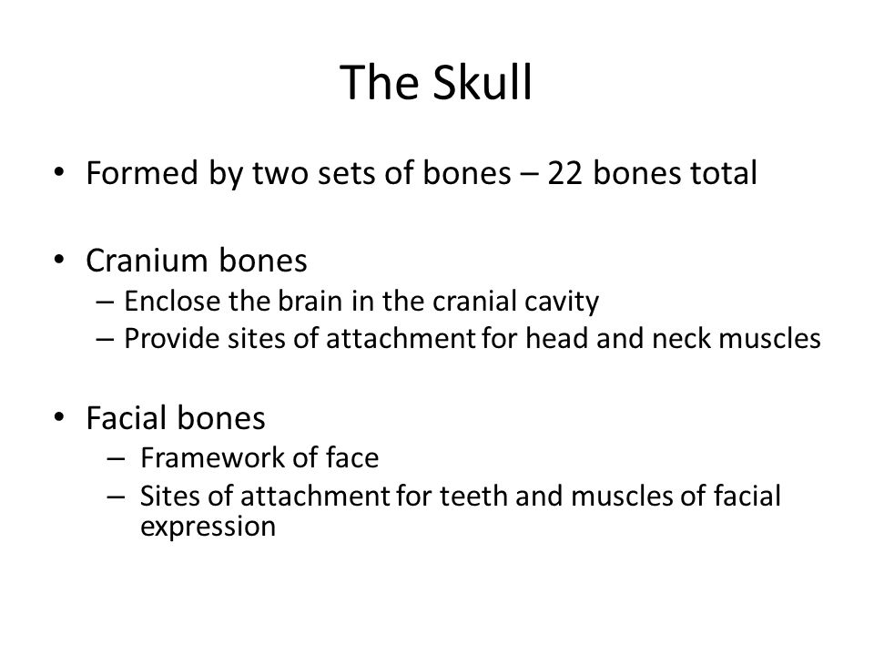 The Skull Formed by two sets of bones – 22 bones total Cranium bones