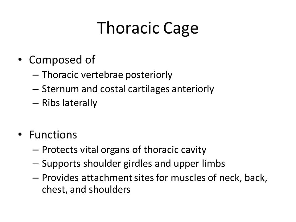 Thoracic Cage Composed of Functions Thoracic vertebrae posteriorly