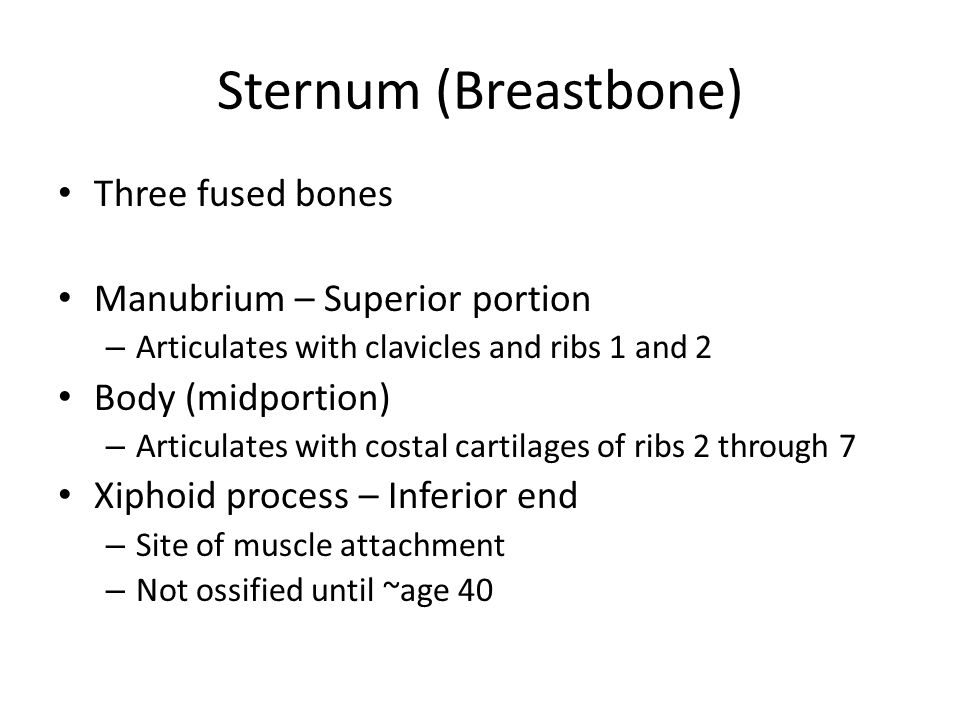 Sternum (Breastbone) Three fused bones Manubrium – Superior portion